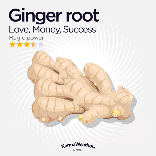 Ginger root illustration