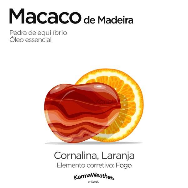 Macaco de Madeira: pedra de equilíbrio e óleo essencial
